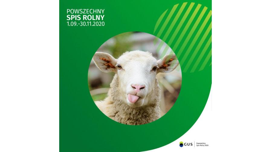 Logo Powszechnego Spisu Rolnego 2020, zdjęcie owcy